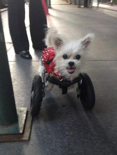 lexi-on-wheels